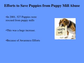 Efforts to Save Puppies from Puppy Mill Abuse