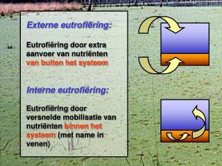 Externe eutrofiëring: Eutrofiëring door extra aanvoer van nutriënten  van buiten het systeem