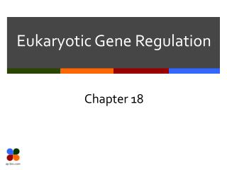 Eukaryotic Gene Regulation