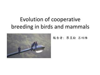 Evolution of cooperative breeding in birds and mammals