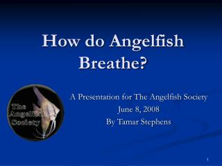 How do Angelfish Breathe
