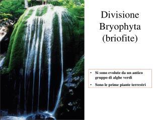 Divisione  Bryophyta briofite