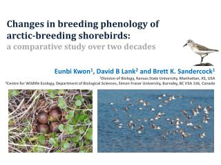Changes in breeding phenology of  arctic-breeding shorebirds: