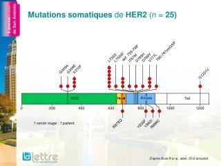 Mutations somatiques  de  HER2  (n =  25)