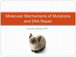 Molecular Mechanisms of Mutations and DNA Repair