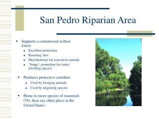 San Pedro Riparian Area