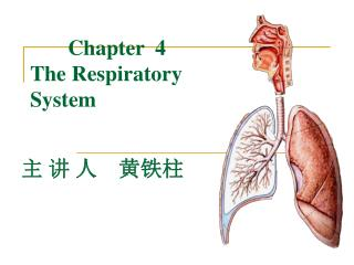 Chapter  4  The Respiratory System