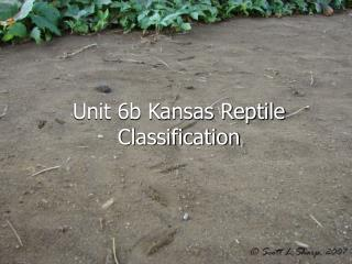 Unit 6b Kansas Reptile Classification