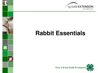 Rabbit Essentials