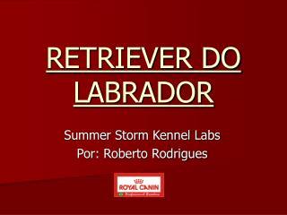 RETRIEVER DO LABRADOR