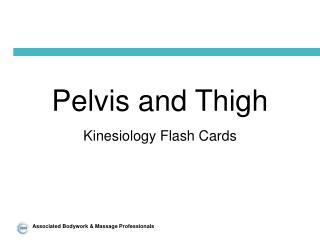 Pelvis and Thigh