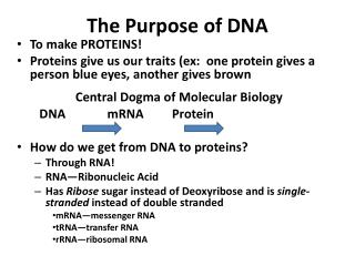 The Purpose of DNA