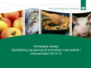 Kampagne oplæg! Opstaldning og pasning af ammekøer med opdræt i vinterperioden 2014-15.