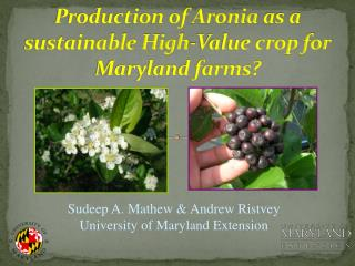 Production of  Aronia  as a sustainable High-Value crop for  Maryland farms?