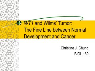 WT1  and Wilms' Tumor: The Fine Line between Normal Development and Cancer