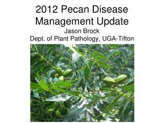 2012 Pecan Disease Management Update Jason Brock Dept. of Plant Pathology, UGA-Tifton