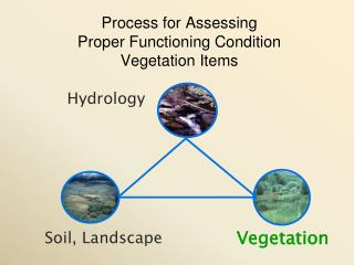 Process for Assessing  Proper Functioning Condition  Vegetation Items