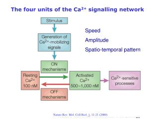 The four units of the Ca 2+  signalling network