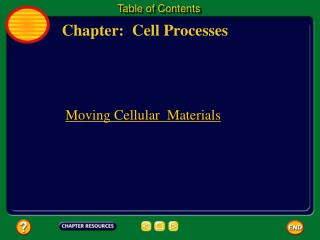 Chapter:  Cell Processes
