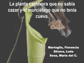 La planta carnívora que no sabía cazar y el murciélago que no tenía cueva.