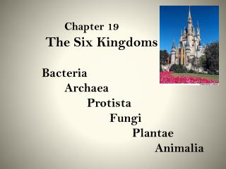 Chapter 19         	 The Six Kingdoms 	Bacteria Archaea Protista Fungi Plantae Animalia