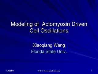 Modeling of   Actomyosin  Driven Cell Oscillations