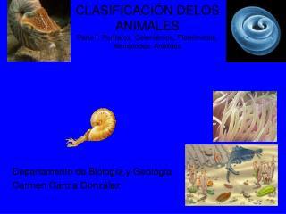 CLASIFICACI N DELOS ANIMALES Parte I: Por feros, Celent reos, Platelmintos, Nematodos, An lidos