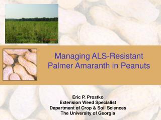 Managing ALS-Resistant Palmer Amaranth in Peanuts