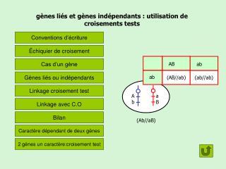 gènes liés et gènes indépendants: utilisation de croisements tests