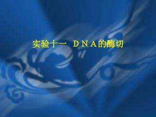 实验十一 DNA的酶切