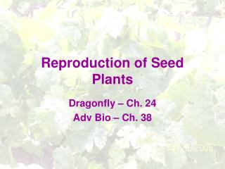 Reproduction of Seed Plants