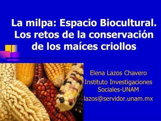 La milpa: Espacio Biocultural. Los retos de la conservación de los maíces criollos