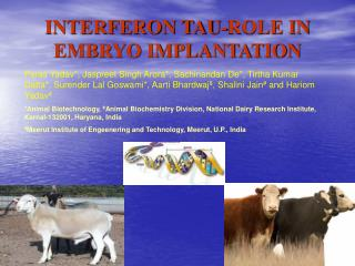 INTERFERON TAU-ROLE IN EMBRYO IMPLANTATION