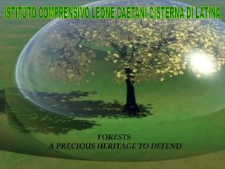 FORESTS  A PRECIOUS HERITAGE TO DEFEND