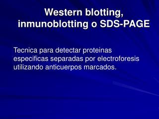 Western blotting,  inmunoblotting o SDS-PAGE