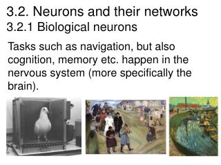 3.2. Neurons and their networks 3.2.1 Biological neurons