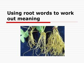 Using root words to work out meaning
