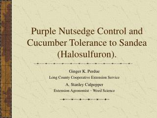Purple Nutsedge Control and Cucumber Tolerance to Sandea (Halosulfuron).