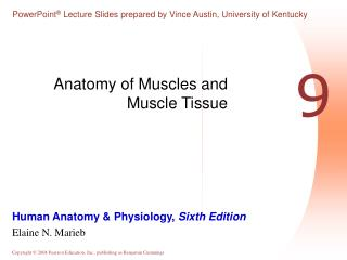 Anatomy of Muscles and Muscle Tissue