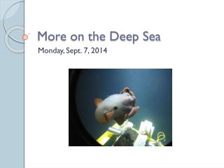 More on the Deep Sea