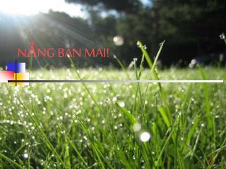 NẮNG BAN MAI!