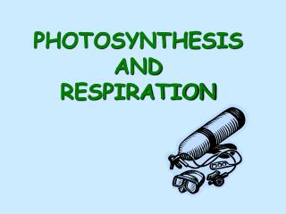 PHOTOSYNTHESISAND  RESPIRATION