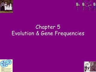 Chapter 5 Evolution & Gene Frequencies