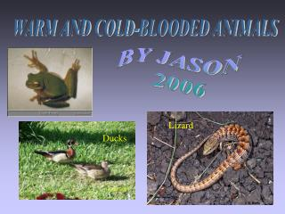 WARM AND COLD-BLOODED ANIMALS