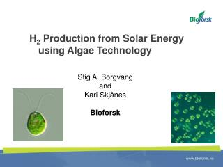 H 2  Production from Solar Energy  using Algae Technology