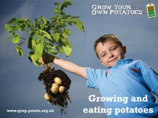 Growing and eating potatoes
