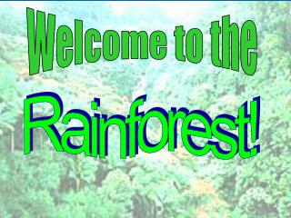 Welcome to the Rainforest Welcome to the
