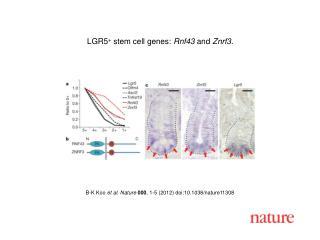 B-K Koo  et al. Nature 000 ,  1-5  (2012) doi:10.1038/nature11308