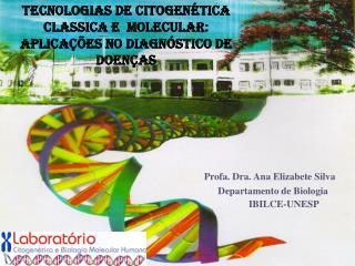Profa. Dra. Ana Elizabete Silva                         Departamento de Biologia IBILCE-UNESP