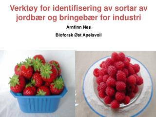 Verktøy for identifisering av sortar av jordbær og bringebær for industri  Arnfinn Nes